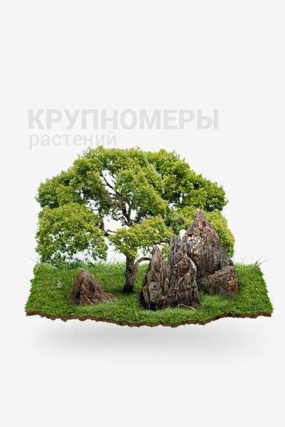 Крупномеры растений в Краснодаре