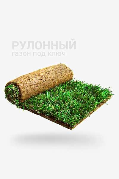 Рулонный газон под ключ недорого